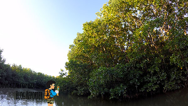 mangrove action project 2016